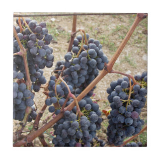 Red grapes on the vine . Tuscany, Italy Tile