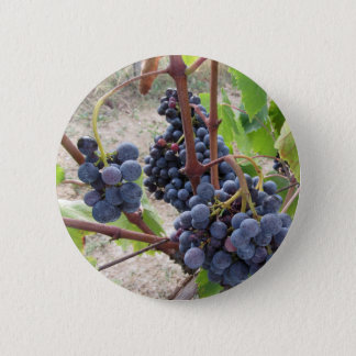 Red grapes on the vine with green leaves 2 inch round button