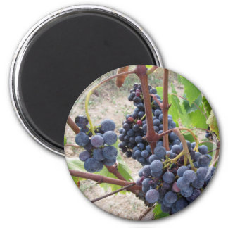 Red grapes on the vine with green leaves 2 inch round magnet