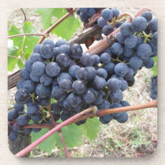 Red grapes on the vine with green leaves beverage coaster