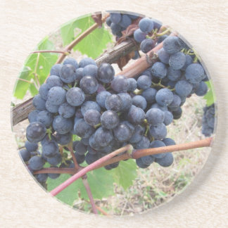 Red grapes on the vine with green leaves coaster
