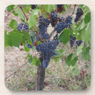 Red grapes on the vine with green leaves drink coaster