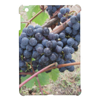 Red grapes on the vine with green leaves iPad mini cover