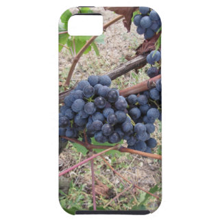 Red grapes on the vine with green leaves iPhone 5 cover