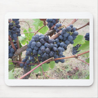 Red grapes on the vine with green leaves mouse pad