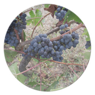 Red grapes on the vine with green leaves plates