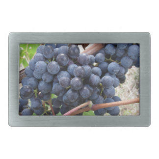 Red grapes on the vine with green leaves rectangular belt buckles