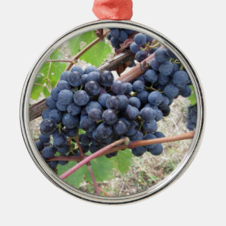 Red grapes on the vine with green leaves Silver-Colored round ornament