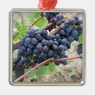 Red grapes on the vine with green leaves Silver-Colored square ornament