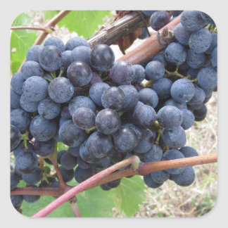 Red grapes on the vine with green leaves square sticker
