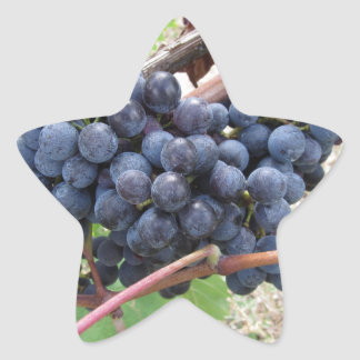 Red grapes on the vine with green leaves star sticker