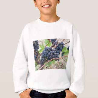 Red grapes on the vine with green leaves sweatshirt