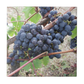 Red grapes on the vine with green leaves tile