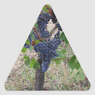 Red grapes on the vine with green leaves triangle sticker