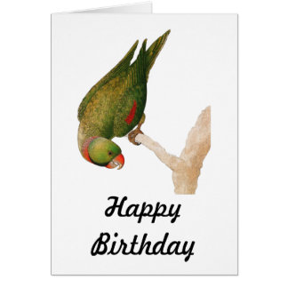 Red Green Parrot Greeting Card