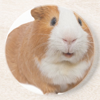 red guinea pig coaster