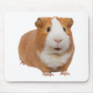 red guinea pig mouse pad