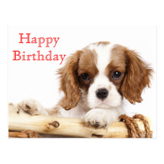 Red Happy Birthday Cavalier King Charles Spaniel Postcard