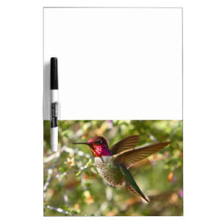 Red Headed Hummingbird Dry Erase Board