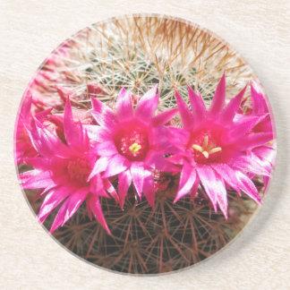 Red Headed Irishman Cactus, Customizable! Beverage Coasters