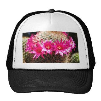 Red Headed Irishman Cactus, Customizable! Trucker Hat