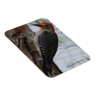 """Red Headed Woodpecker, 3""""x4"""" Photo Magnet"""