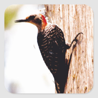 Red-headed Woodpecker at the Mission Nombre de Dio Square Sticker