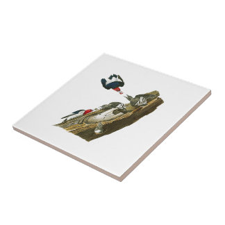Red headed Woodpecker John Audubon Birds America Ceramic Tiles