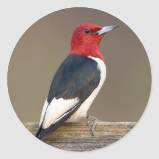 Red-headed Woodpecker on fence Classic Round Sticker