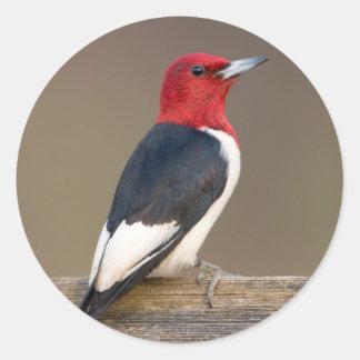 Red-headed Woodpecker on fence Round Sticker