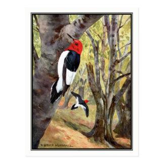 Red-Headed Woodpecker - Robert Bruce Horsfall Postcard