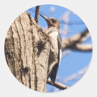 Red-headed Woodpecker Round Sticker