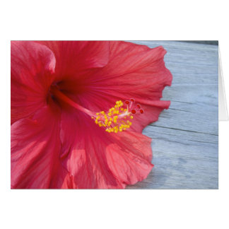 Red Hibiscus Bloom Card