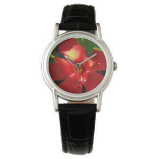 Red Hibiscus Flower in Sunlight Watch