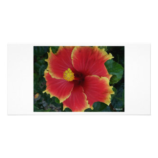 Red Hibiscus Flower - Photography Aggelikis Personalized Photo Card