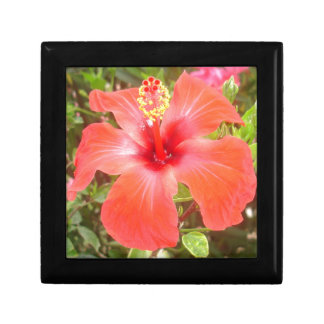 Red Hibiscus Gift Box