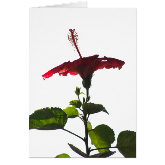 Red Hibiscus, Into the Light Card