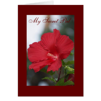 Red Hibiscus, My Secret Pal Greeting Card