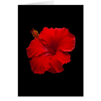 Red Hibiscus on Black - Customized Template
