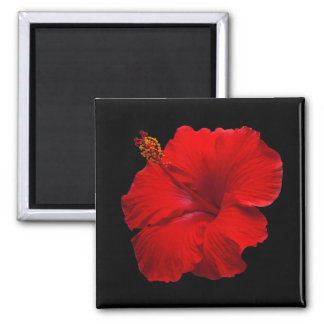 Red Hibiscus on Black - Customized Template Magnet