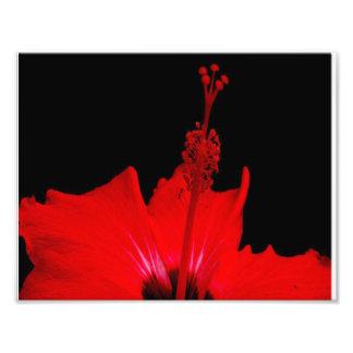 Red Hibiscus Photo Print