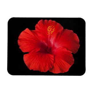 Red Hibiscus Tropical Flower Flowers Floral Rectangular Photo Magnet