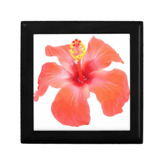 Red Hibiscus Vector Isolated Gift Box