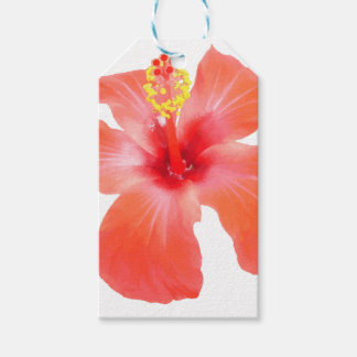 Red Hibiscus Vector Isolated Gift Tags