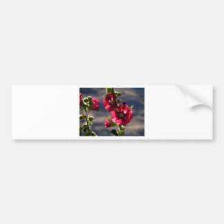 Red Hollyhocks in a summer garden Bumper Sticker