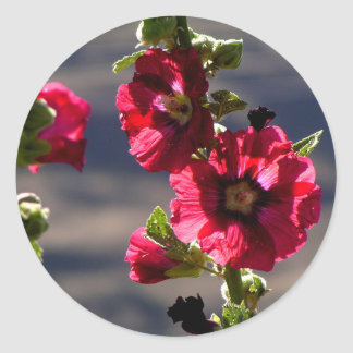 Red Hollyhocks in a summer garden Classic Round Sticker