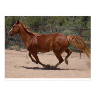 Red Horse Running Postcard