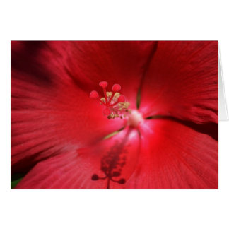 Red Hot Hibiscus Card