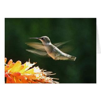 Red Hot Hummingbird Card