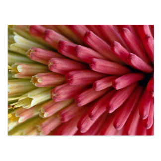 Red hot poker, close-up postcard